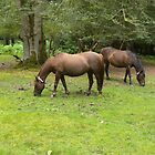 New Forest Ponies.UK by Kay Cunningham
