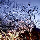 Light Birds by geniusloci