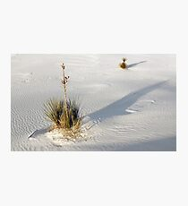 Soap Tree Yucca Photographic Print