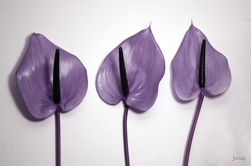 Three Purple Flower by jones