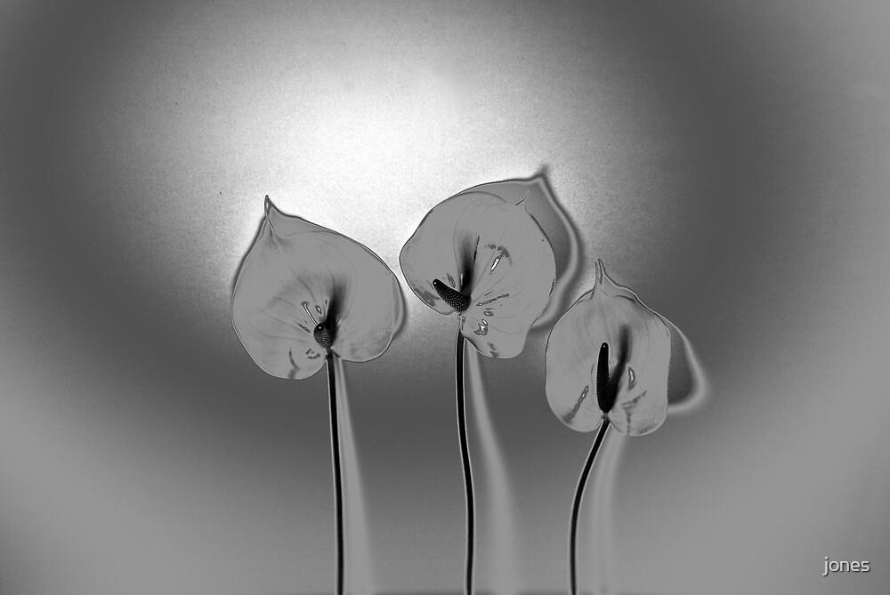 Silver Flowers by jones