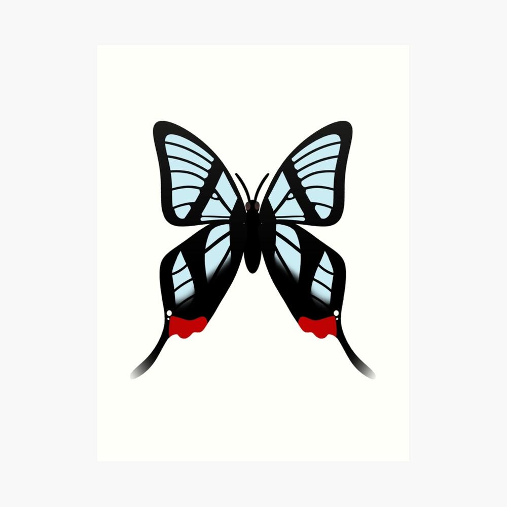 Glasswing Swallowtail Butterfly Art Print