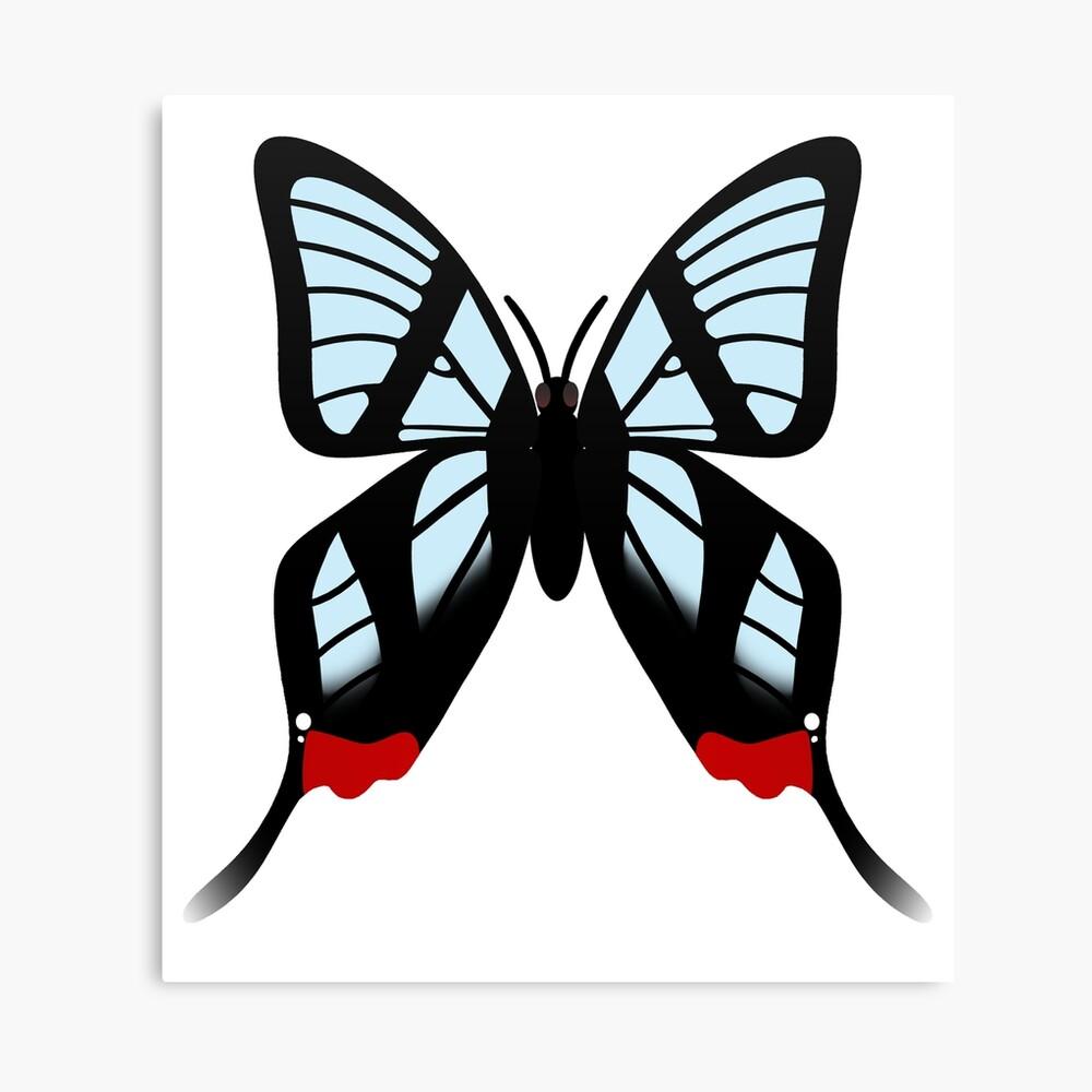 Glasswing Swallowtail Butterfly Canvas Print