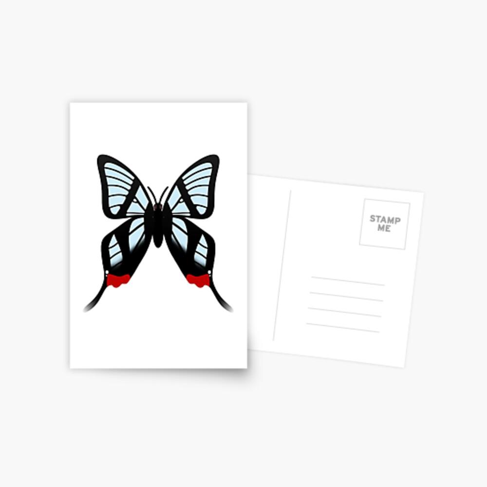 Glasswing Swallowtail Butterfly Postcard