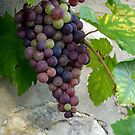 French grapes on a wall by Margaret  Shark