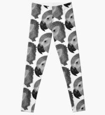 African Grey Leggings