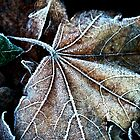 Crystals on a leaf by AnnaKT