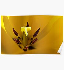 Heart of the Tulip - Yellow Tulip - NZ - Southalnd Poster