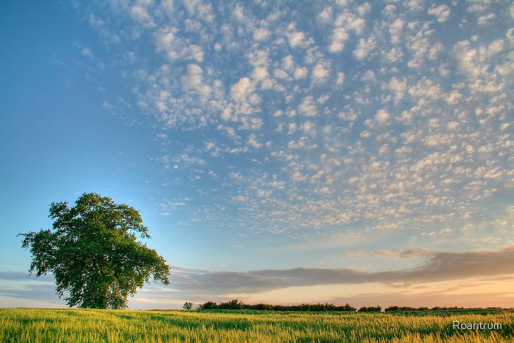 June Evening by Roantrum