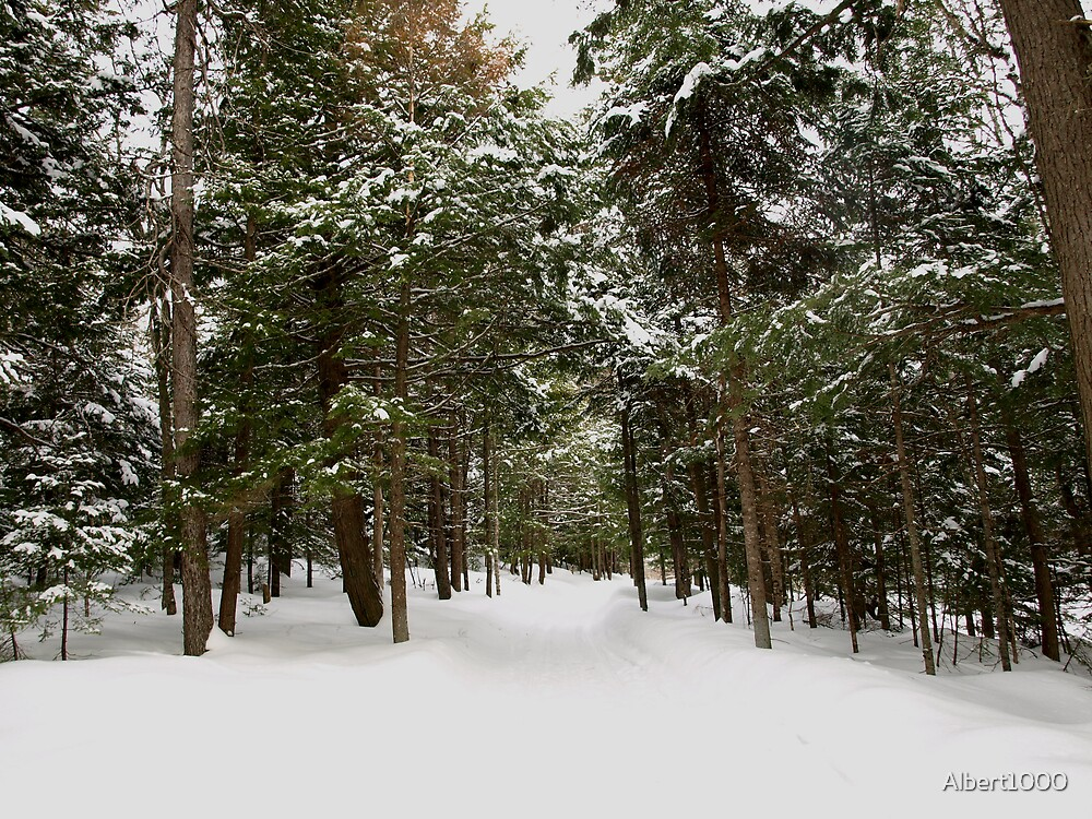 NC Winter in the forest #2 by Albert1000