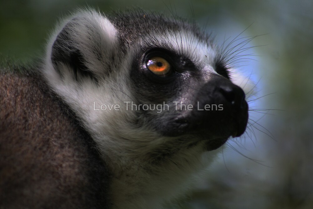 The Tree Climber by Love Through The Lens
