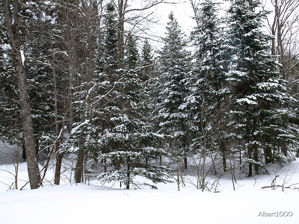 NC Into the winter forest by Albert1000