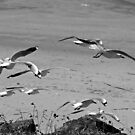 Fly away ~ seagulls  by Margaret Stanton