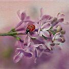 Ladybird on purple lilacs by Ellen van Deelen