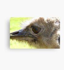 The Eye of Emu - NZ - Invercargill - Southland Metal Print