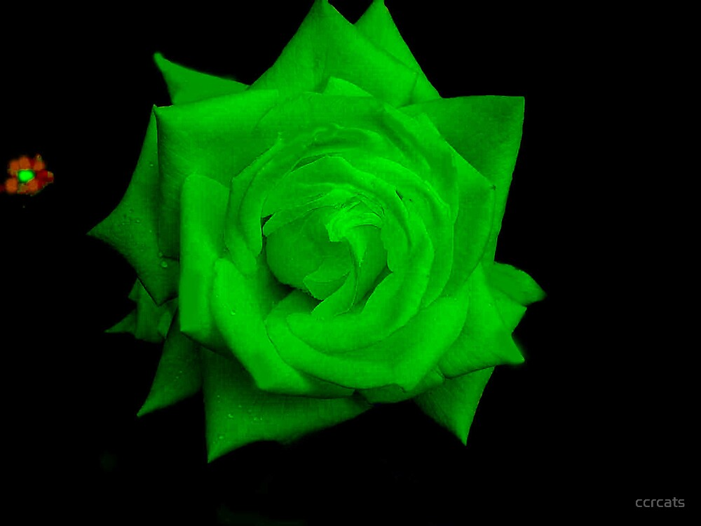 Green Rose. by ccrcats