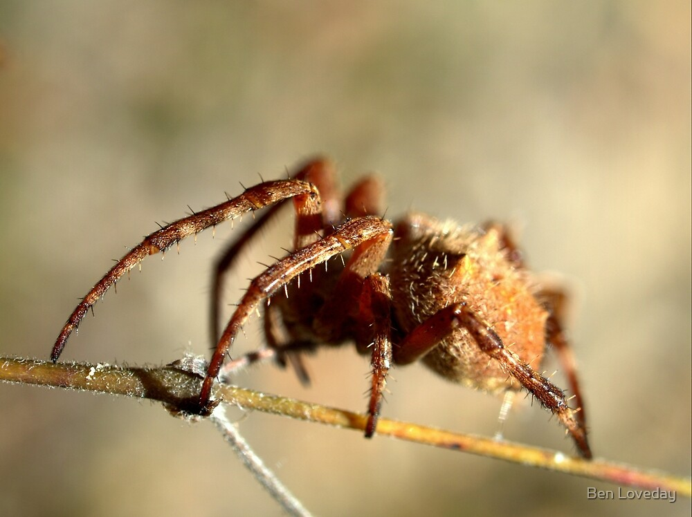 Arachnid by Ben Loveday