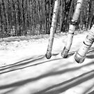 Birches and Snow 4 BW by marybedy