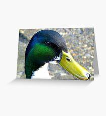 I'm back - Mallard Duck - Invercargill - New Zealand Greeting Card