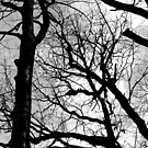 Forest Patterns 10 BW by marybedy