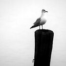 Gull on Post by marybedy