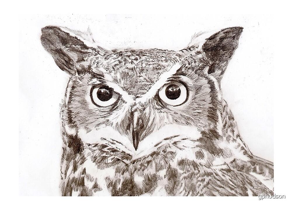Owl by gphudson
