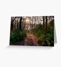 Forest Track Greeting Card