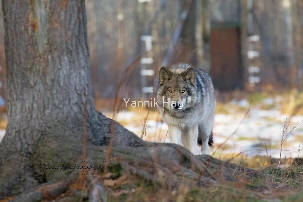 Prowler by Yannik Hay