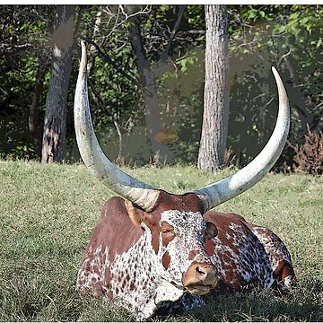 Texas Longhorn by mlwhite