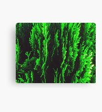 closeup green leaf texture abstract background Canvas Print