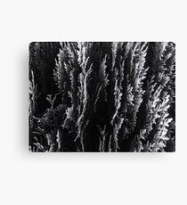 closeup leaf texture abstract background in black and white Canvas Print