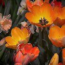 USA. Pennsylvania. Philadelphia Flower Show 2017. Tulips. by vadim19