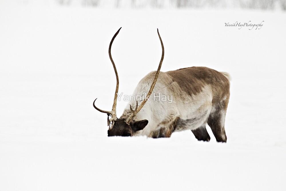 In the Blizzard - Reindeer by Yannik Hay