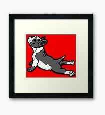 Boston Bull Terrier Puppy Black and White Framed Print