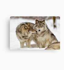 Love you sweetie... - Timber Wolves Canvas Print