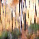 Trees - 26 - Impressions by Yannik Hay