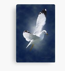 White Gull Canvas Print