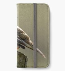 Meadow Pippit iPhone Wallet/Case/Skin