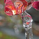 Drip...Drip...Drip... ! by robkal