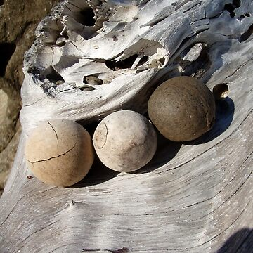 baby coconuts by FUSIONART