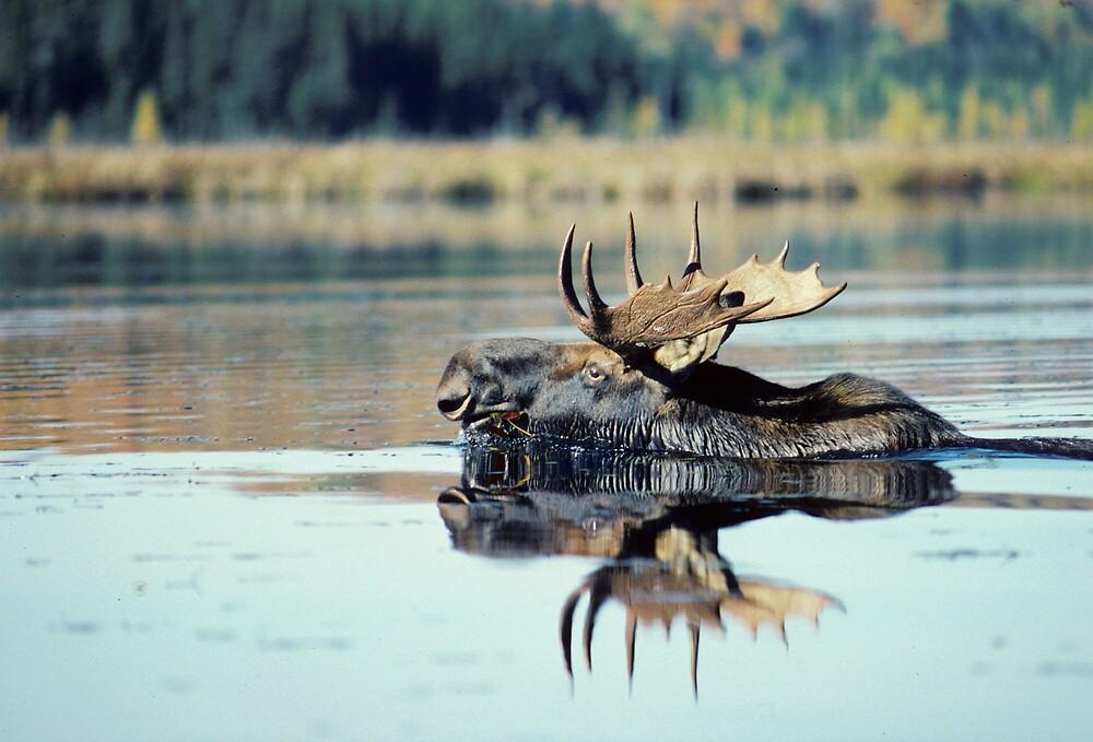 Not a bad swimmer by bertspix