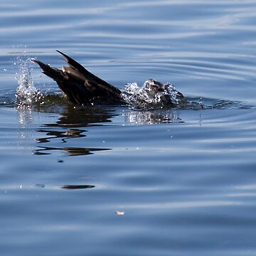 Duckdive by palmerphoto