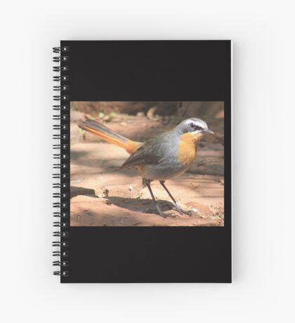 Cape Robin giving me the eye Spiral Notebook