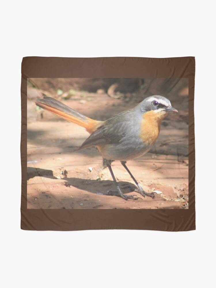 Alternate view of Cape Robin giving me the eye Scarf