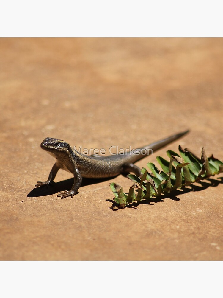 Interacting with wildlife - African Striped Skink by MareeClarkson