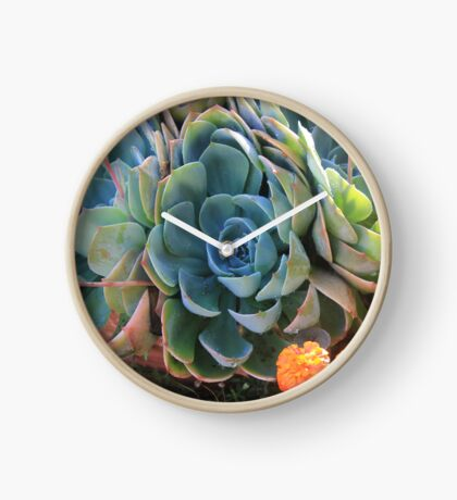 Echeverias after the rain Clock