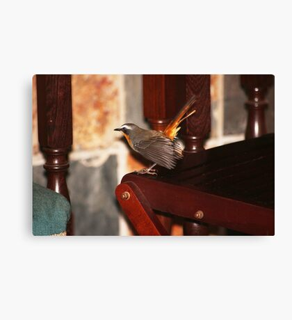 Robin in my house Canvas Print
