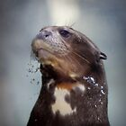 giant river otter by Marianna Tankelevich