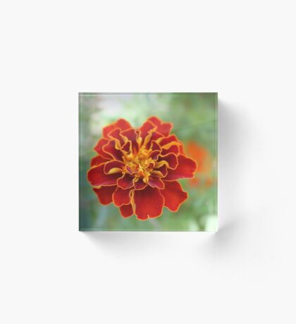 Oh! Marigold! Acrylic Block