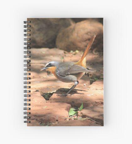 Cape Robin (Cossypha caffra) Spiral Notebook
